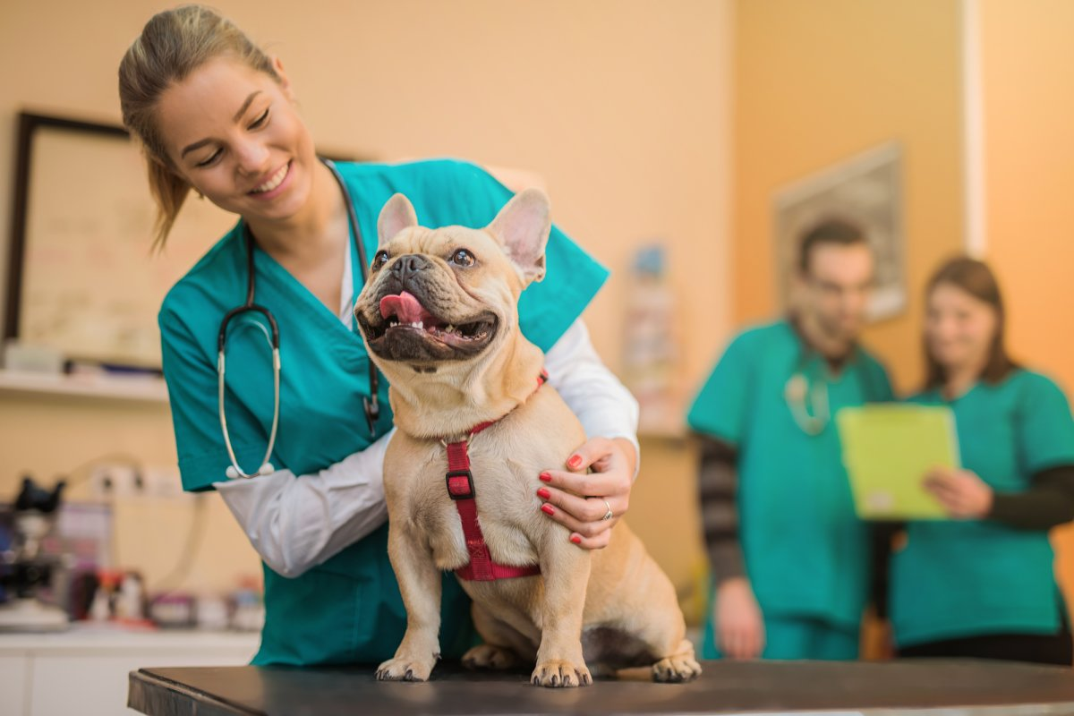 how to become a veterinarian in texas