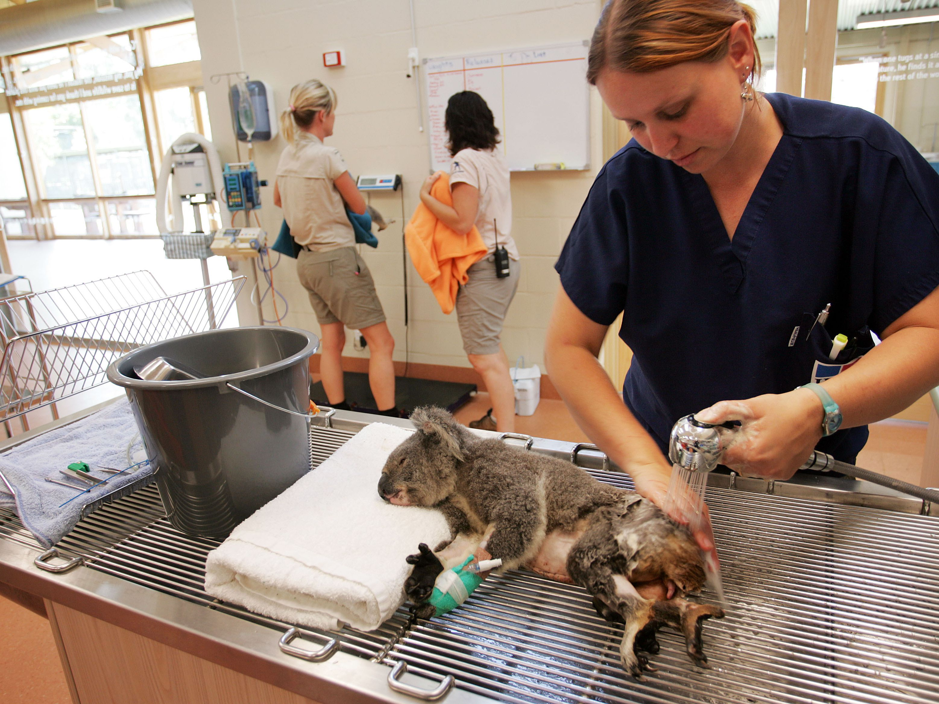 how to become a wildlife veterinarian